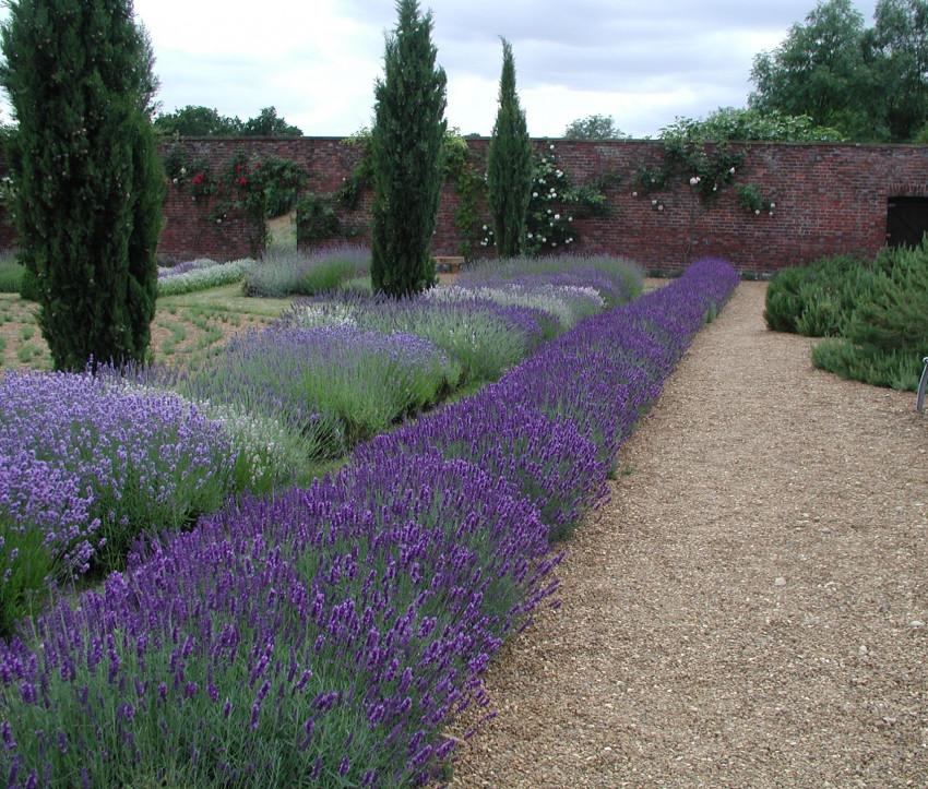 Gestalten Mit Lavendel